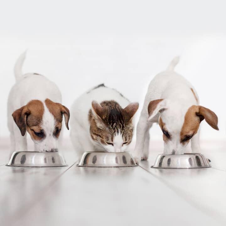 Articles pour animaux de compagnie