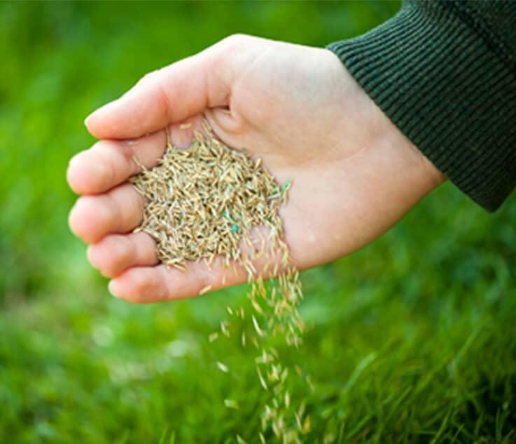 Entretien de la pelouse thumb