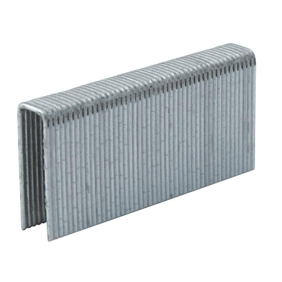 PRIMATECH:Paquet de 1 000 agrafes à plancher de calibre 15,5, 1-1/2 po