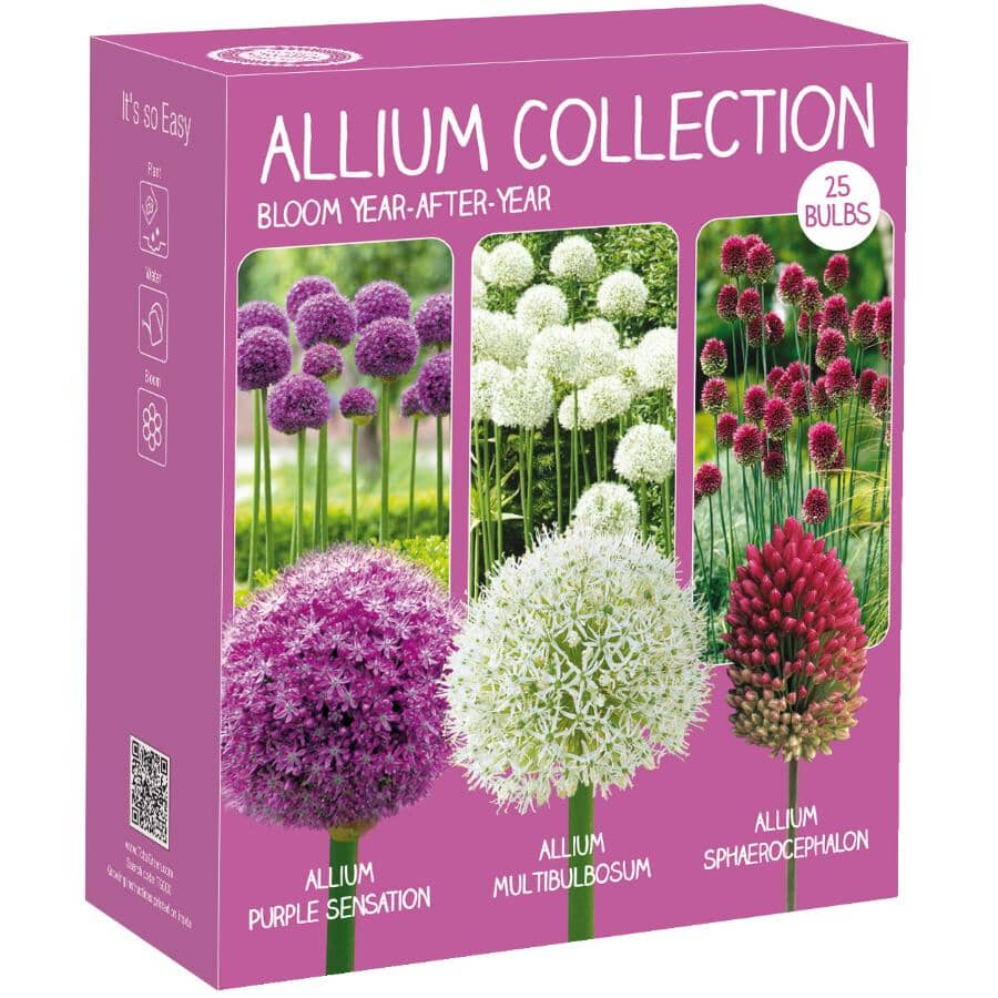 TOTAL GREEN:Allium Flower Bulbs - Assorted Varieties, 25 Pack