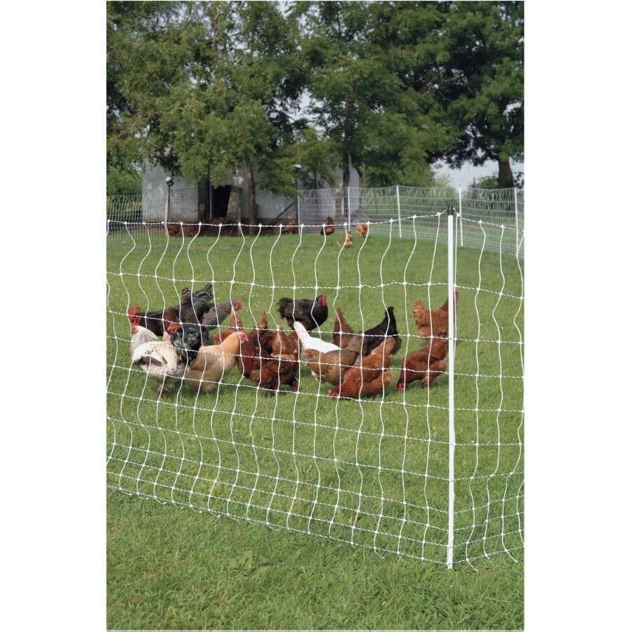 """GALLAGHER:Poultry Netting - 48"""" x 164'"""